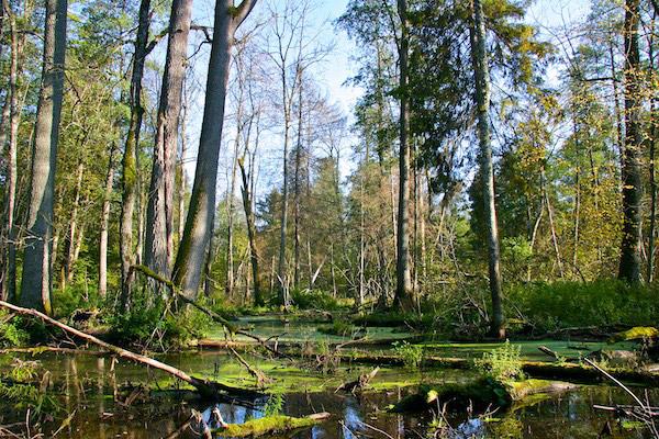 0709.bialowieza-forest-photo-by-lukasz-mazurek-wildpoland-com-05