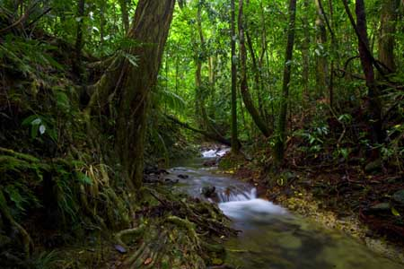1_daintree_rainforest