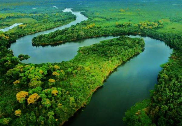 Foreste sempreverdi equatoriali e foreste umide