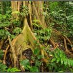 COSA DETERMINA LA NASCITA DI UNA FORESTA PLUVIALE