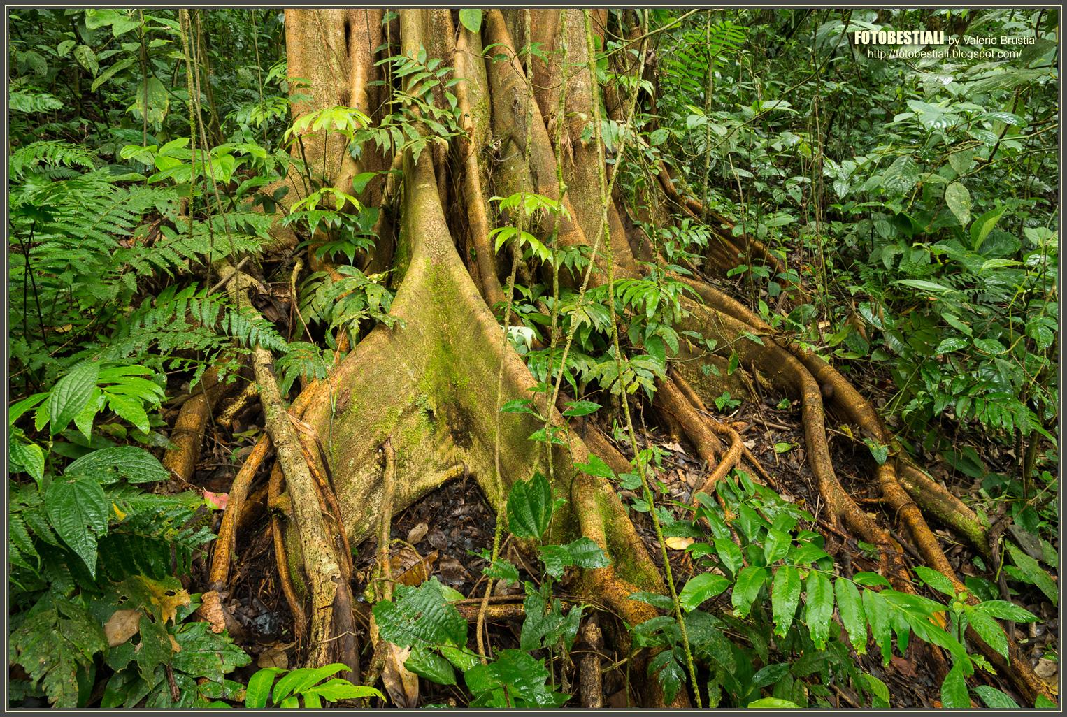 Cosa determina la nascita di una foresta pluviale terraria - Gli animali della foresta pluviale di daintree ...