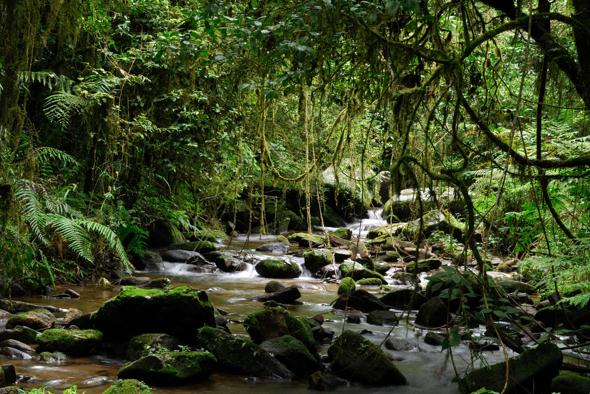 A stream in the rainforest of Ranomafana National Park, eastern Madagascar. August 2010.