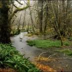 Foresta tropicale umida e di transizione (wet forest)