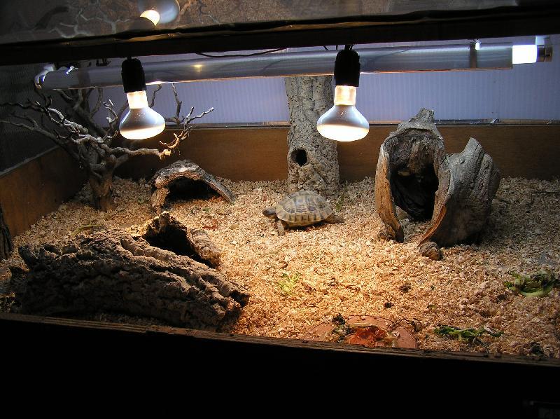Struttura di un terrario tipologia di materiali e for Luce per tartarughe