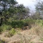 Foresta tropicale secca o decidua (dry forest)