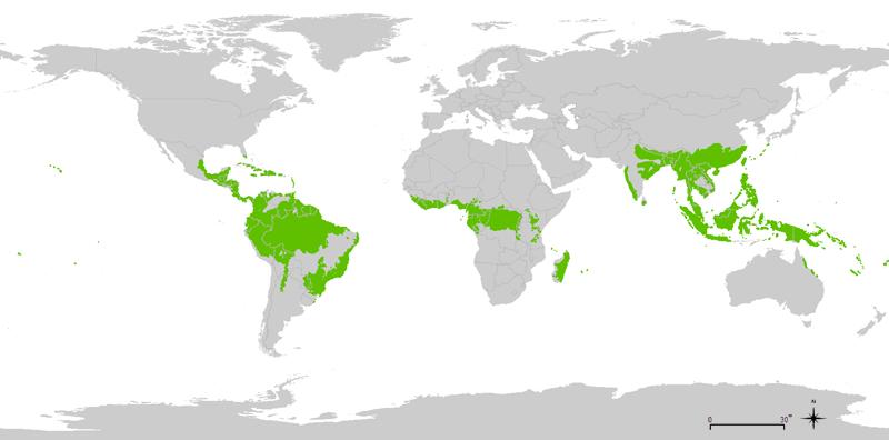 DOVE SONO SITUATE LE FORESTA TROPICALI?
