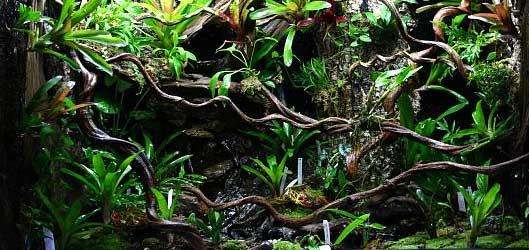 93276151090rainforest-terrarium