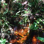 La foresta a torba