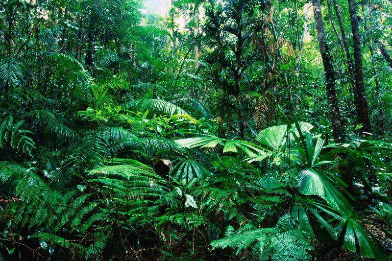 Foresta primaria e foresta secondaria