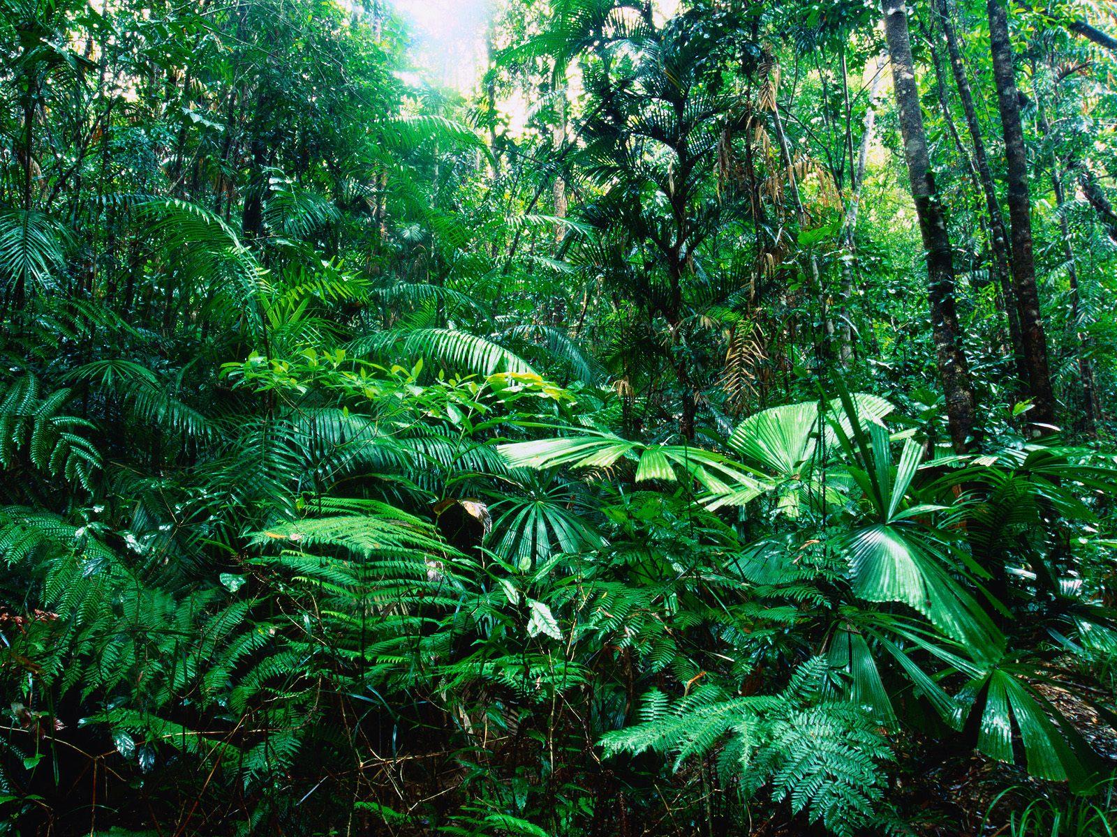 Esempio di foresta secondaria o giungla