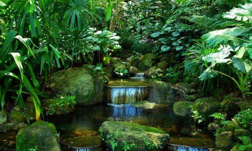 Foresta stagionale o monsonica