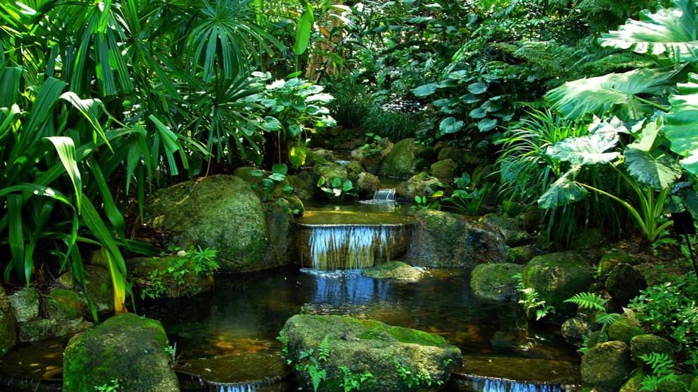 Foresta stagionale o monsonica terraria - Giardino tropicale ...