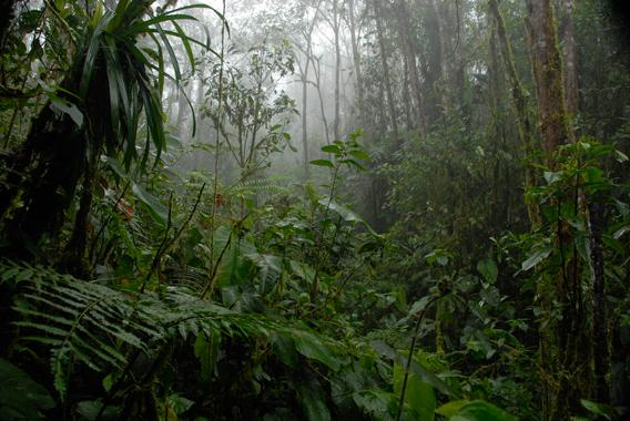 foresta montana