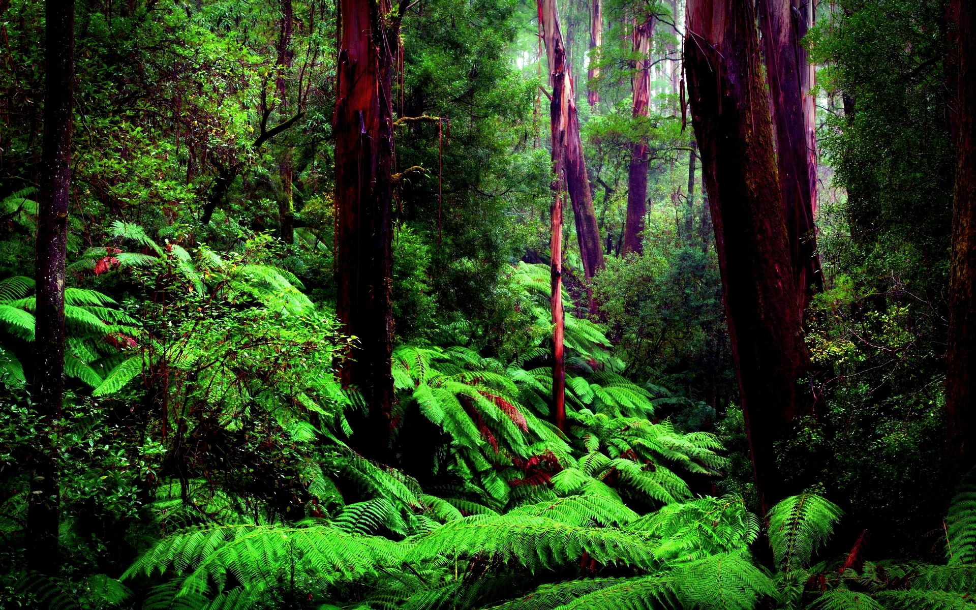 amazon-forest