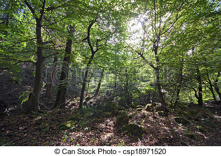 Morning forest with moorland