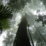 Foresta tropicale nebbiosa (cloud forest)