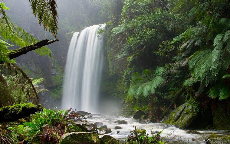 Foresta di bassopiano e foreste montane