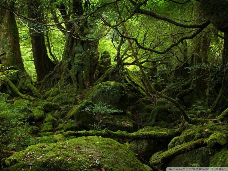 foresta-pluviale-21