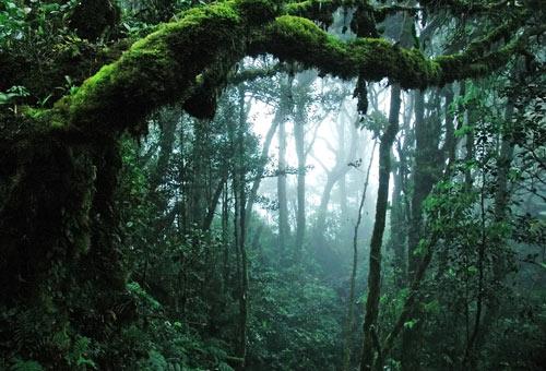 foresta-pluviale-panama