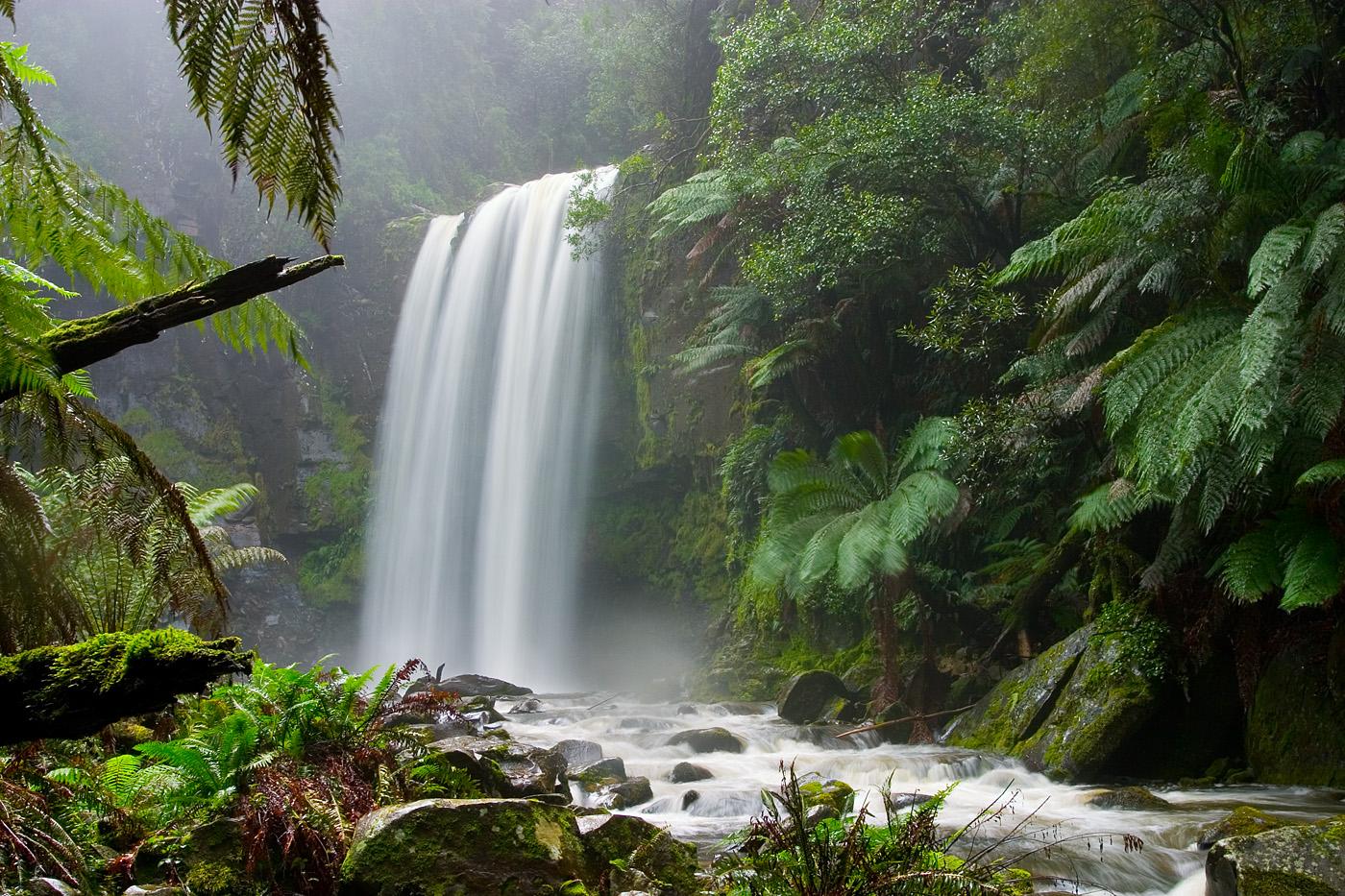 Foresta di bassopiano e foreste montane terraria - Gli animali della foresta pluviale di daintree ...
