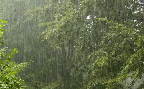 foto-della-foresta-pluviale-nb15159