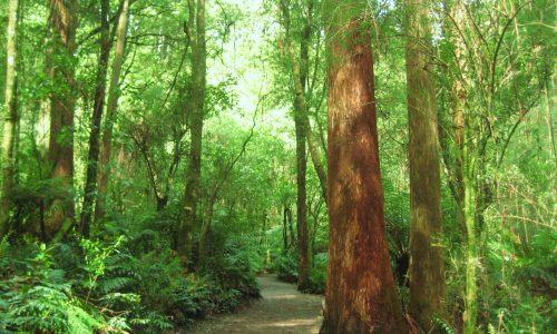 "La foresta a ""terra ferma"""
