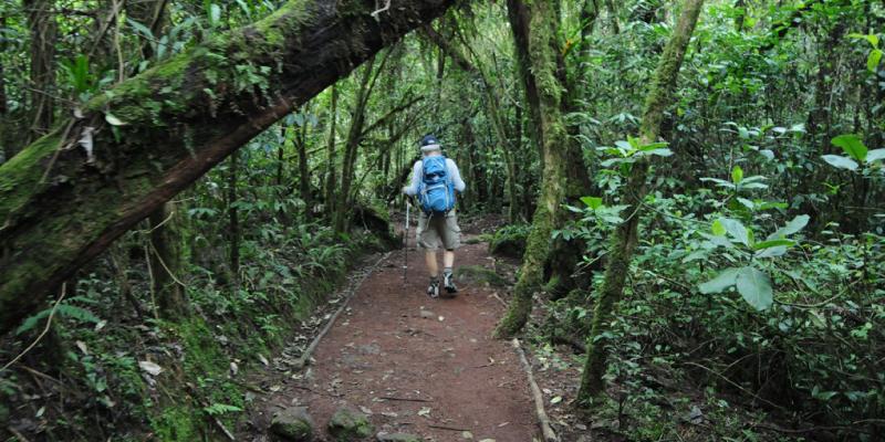kilimanjaro-forest