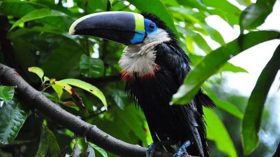 la-foresta-amazzonica