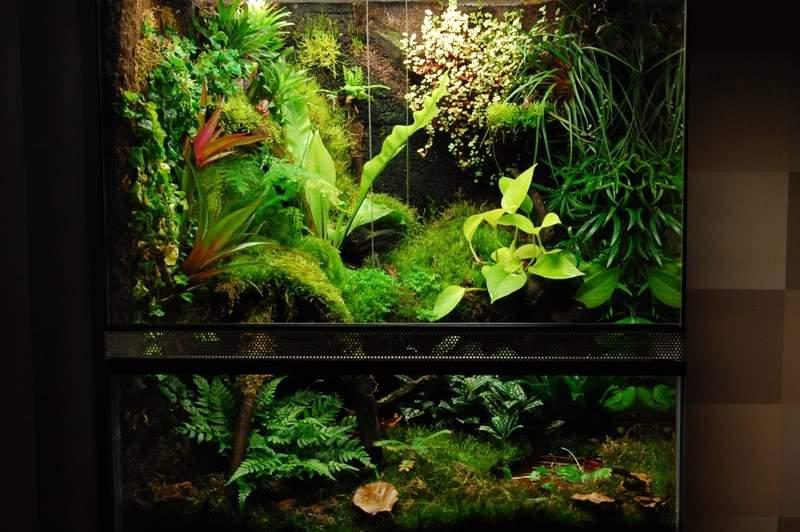 Illuminazione terrario piante carnivore: piante carnivore