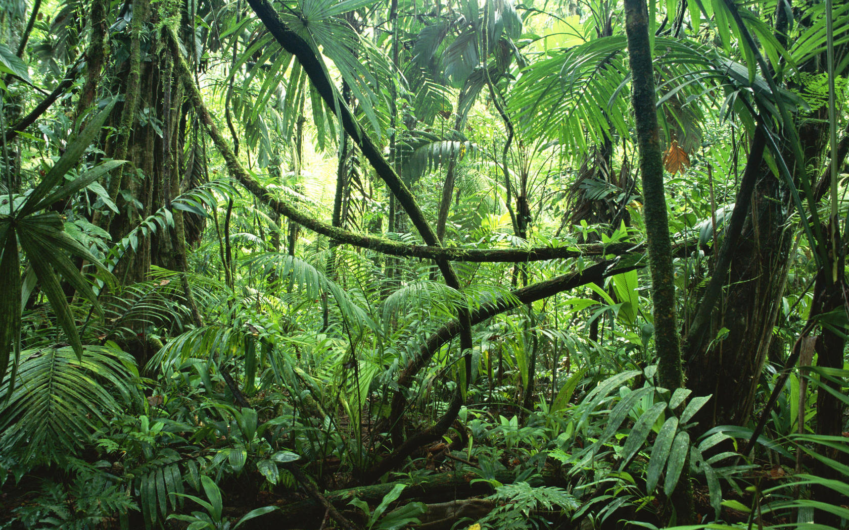 rainforest-trees-and-plants