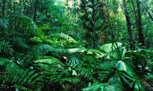 Foresta tropicale pluviale (rain forest)