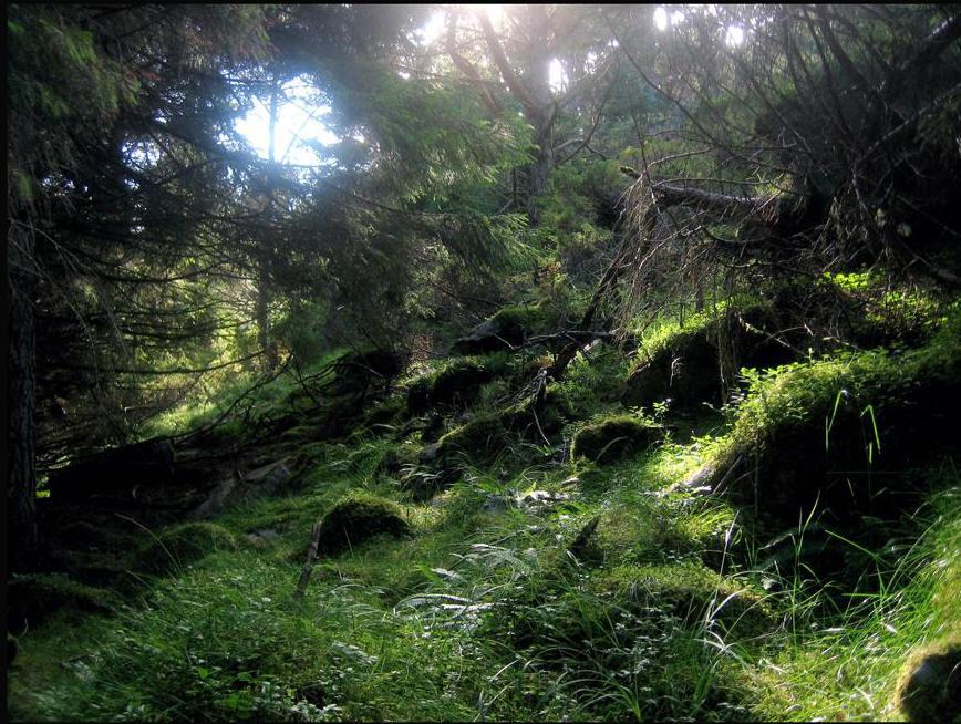 Tipo di foresta primaria amazzonica
