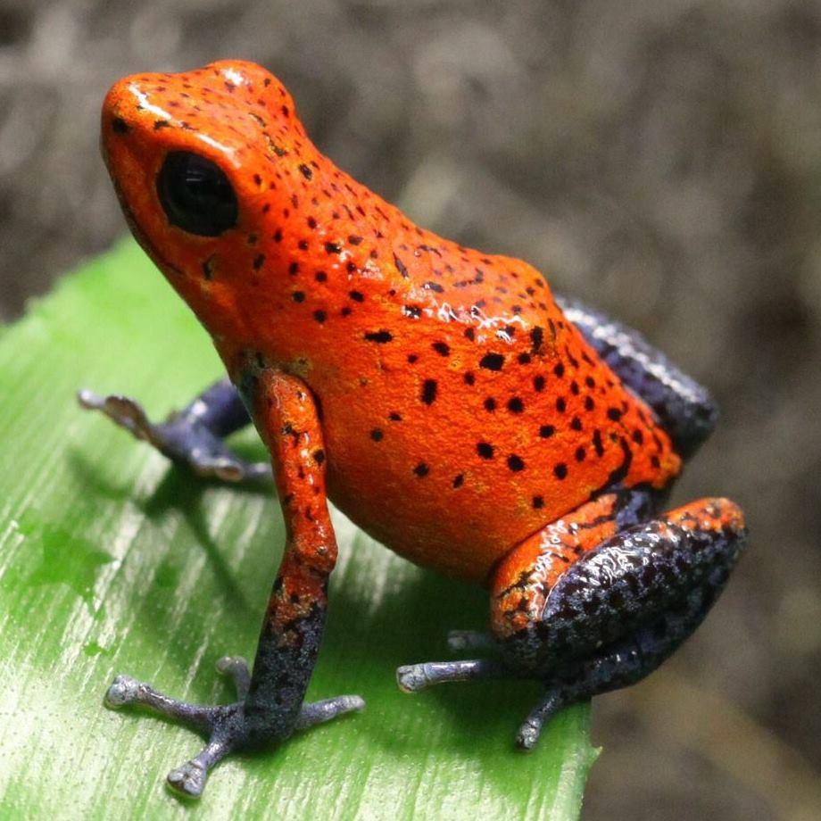Risultati immagini per animali della foresta tropicale