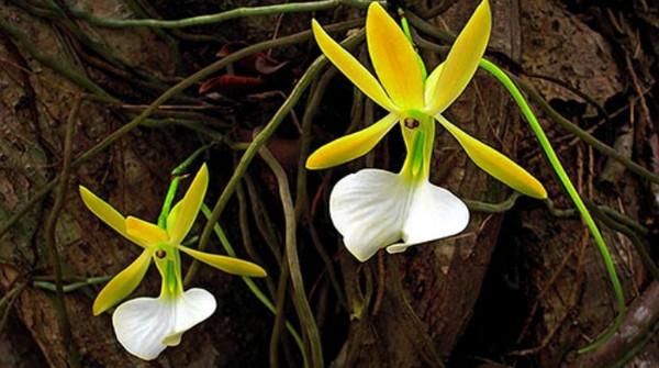 4-Orchidea-Papua-Nuova-Guinea-giro-del-mondo-in-80-giorni