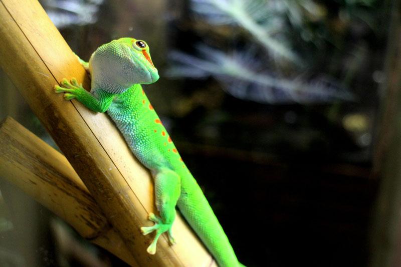 Amazonian-Rainforest