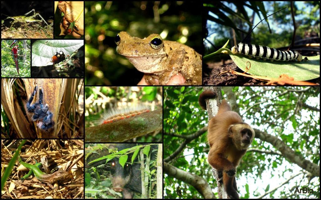 Biodiversidad5