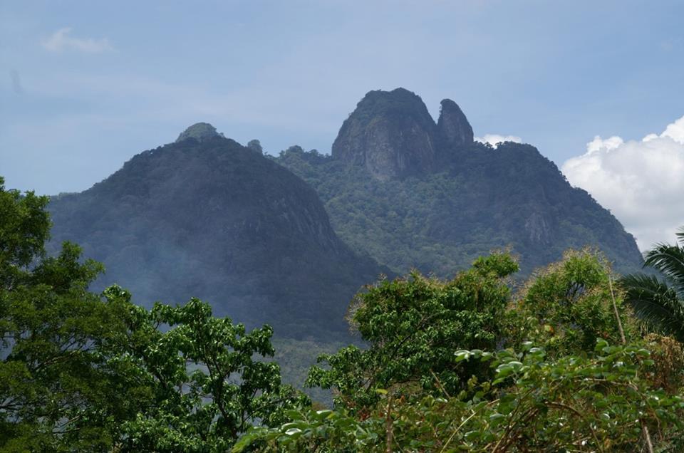 D. auratus 'Alto de Campana' - Panama. 2