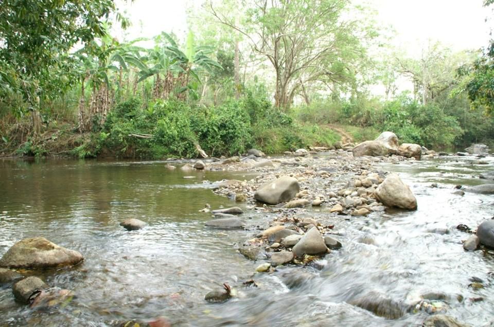 D. auratus 'Alto de Campana' - Panama. 4