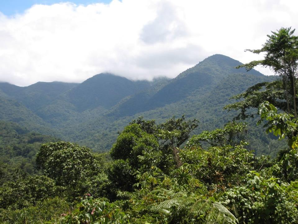 D. auratus 'Alto de Piedra' - Panama. 2