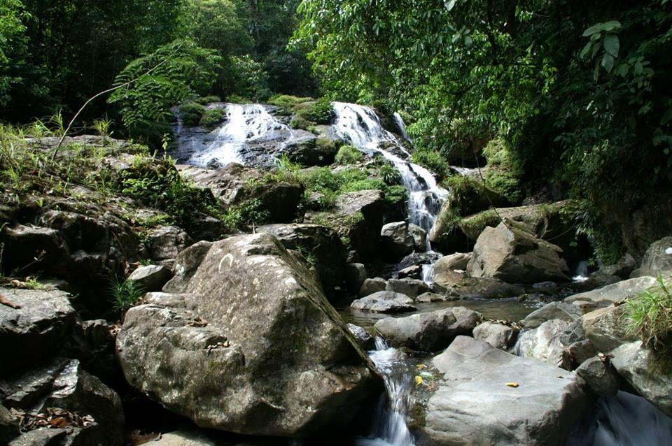 D. auratus 'Alto de Piedra' - Panama. 4