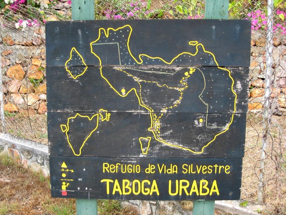 D. auratus 'Taboga' si possono trovare sul isola di Taboga. Questa isola depone davanti alla costa vicino a Panama City, nell'Oceano Pacifico. 3