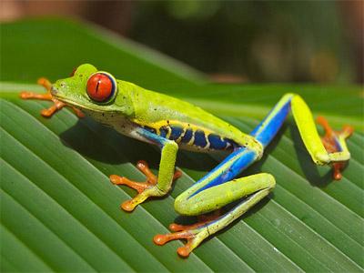amazzonia_biodiversita