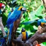 LA BIODIVERSITA' DELLE FORESTE TROPICALI