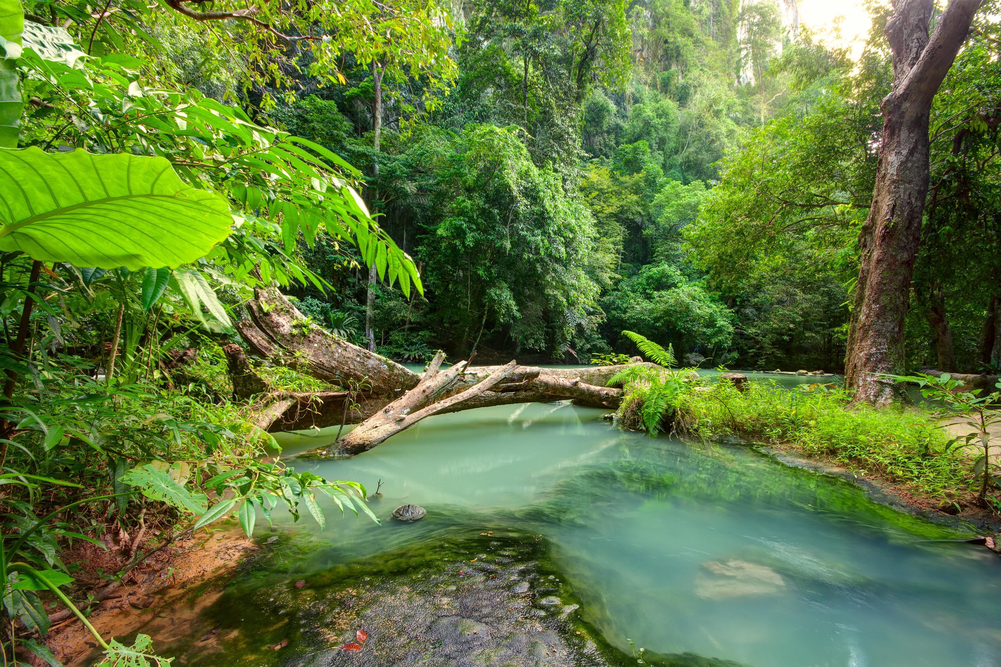 Nel fitto della foresta pluviale tropicale terraria for Come costruire una palestra nella giungla