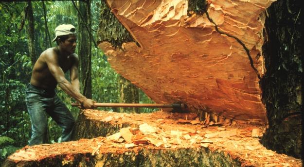 deforestacion-1