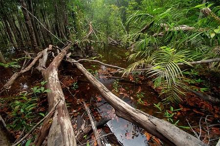 LE FORESTE PLUVIALI DI PIANURA