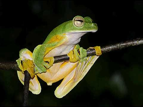 La fauna della foresta tropicale terraria - Gli animali della foresta pluviale di daintree ...