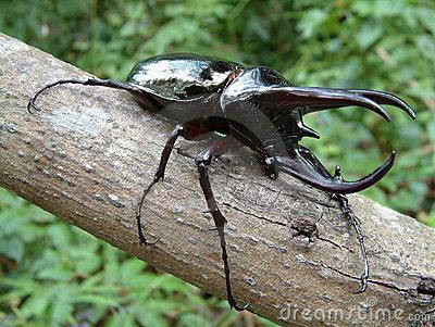 scarabeo-tropicale-della-foresta-pluviale-1000808
