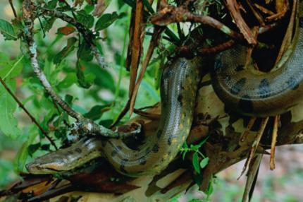 serpente_430_1