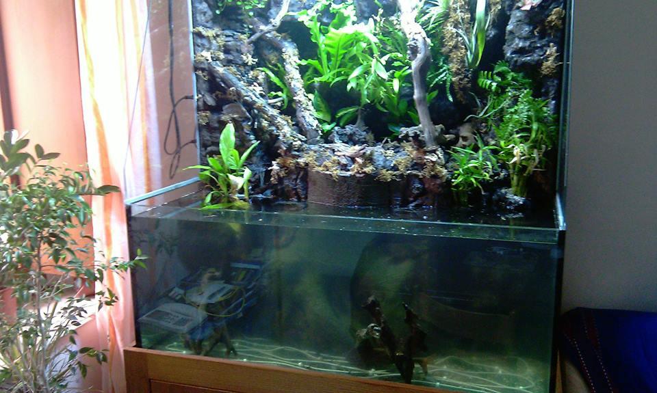 Il mio paludario terraria for Fondo per acquario